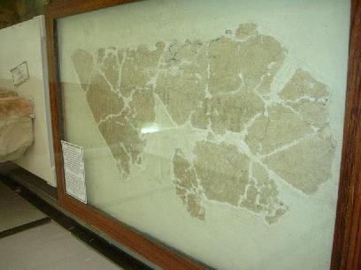 Numbers-Deir 'Alla Balaam Inscription